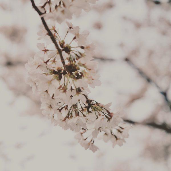 《 春の休息 》